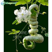 10 seeds/pack Snake Gourd Luffa Seed trichosanthes cucumerina funny vegetable DIY Home Garden Plant Free shipping(China (Mainland))