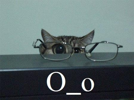 O.o: Kitty Cats, Animals, Funny Stuff, Kitty Kitty, Crazy Cat, Cat Lady, Eye