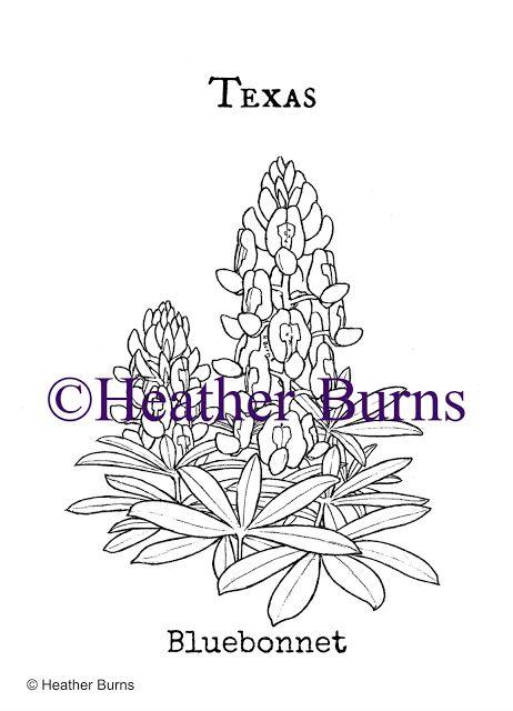 texas state flower bluebonnet unusual flowerscoloring bookscoloring