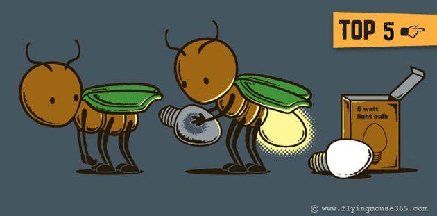 Animales que brillan http://algarabianinos.com/explora/top-5-animales-que-brillan/