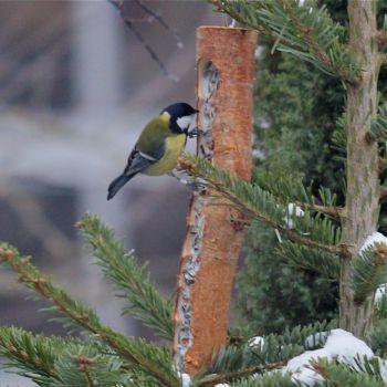 Futterholz mit Füllung aus bestem Vogelfutter und Rindertalg
