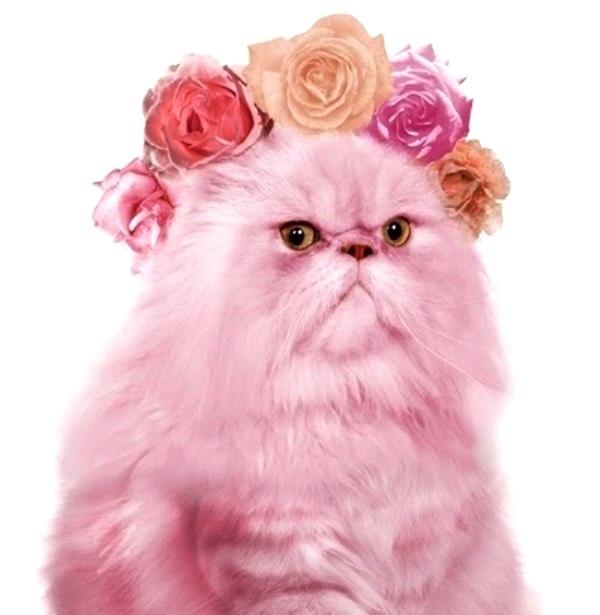 #Pink #cat #flowercrown ToniK ❀Flowers in their coats❀