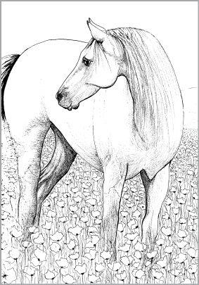 Kleurplaat Paard Door Marja Van T Wel Ontworpen Door