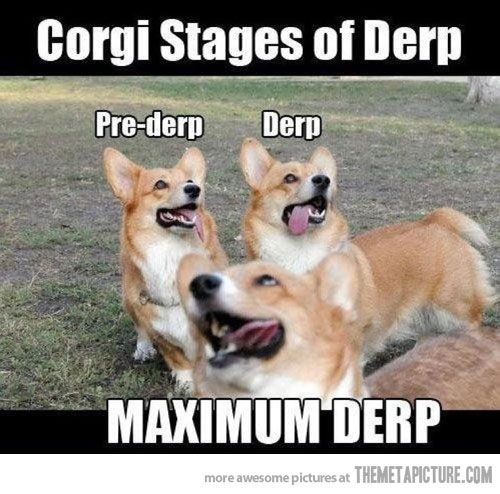 Corgi derp stages