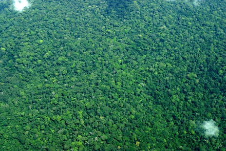 Salonga National Park - Democratic Republic of the Congo