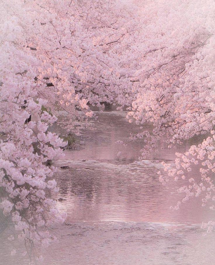 sakura, spring, flower, Japan