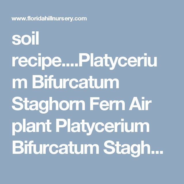soil recipe....Platycerium Bifurcatum Staghorn Fern Air plant Platycerium Bifurcatum Staghorn Fern Air plant [] - $7.99 : Buy Banana Plants & More Tropical Plants For Sale, Florida Hill Nursery