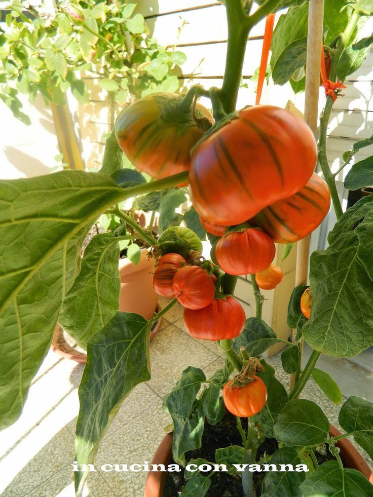 in cucina con vanna: Le melanzane di Rotonda ripiene