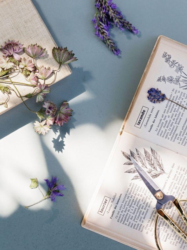 Pflanzen aus dem eigenen Garten für die Ewigkeit: Dafür einfach die Pflanzen in einem Buch trocknen lassen. #pflanzenfreude #diy