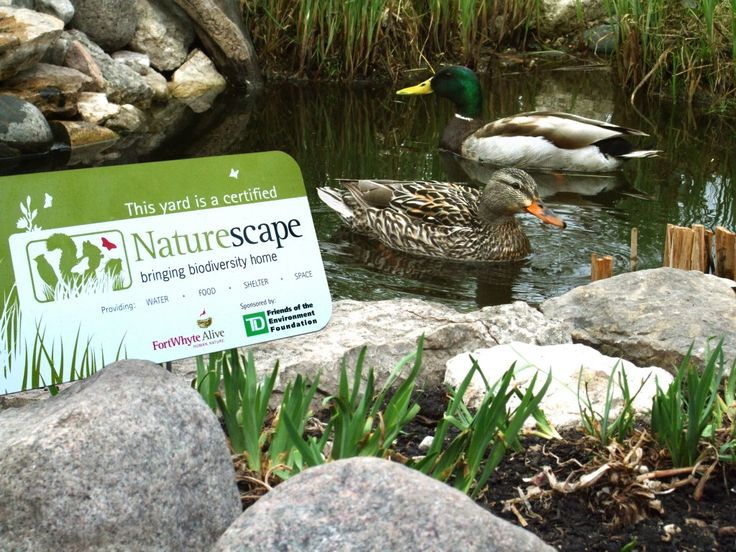 Invite Nature into your Backyard!  FortWhyte's Naturescape program empowers you to transform your outdoor space into a habitat for Manitoba flora and fauna by incorporating elements that enhance biodiversity: food, water, shelter and space. Naturescape allows you access to inspiring and diverse presentations and workshops, advice from our helpline, visits to our indoor and outdoor exhibits, plus a variety of kid's programs.