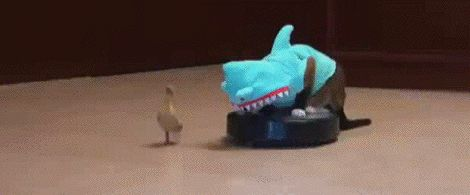 A cat dressed as a shark, riding a Roomba and chasing a duck. The internet doesn't get much better than this, folks