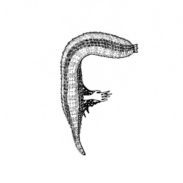 F is for Fanny sucked dry by a leech. – #36daysoftype #36daysoftype_f #36days_F #36daysoftype06 #lettering #blackwork #letters #typespire #alphabet #illustration #design #drawing #draw #artist #ink...