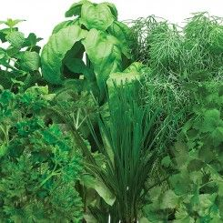 Gourmet Herbs Seed Pod Kit 7 Pod Herb Seeds Seed Pods 400 x 300