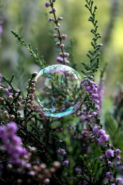 I need to try some photos like this in the spring. I think there are some bubble recipes that are stronger and won't pop easily.