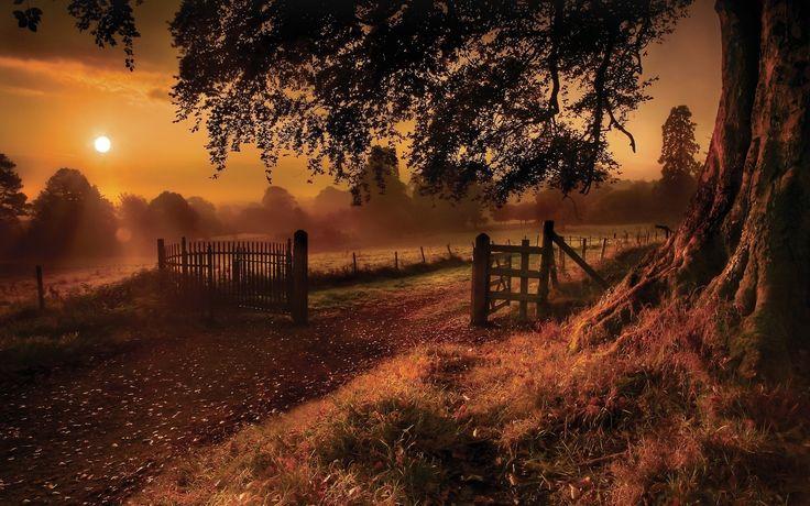1280x800 Sunset Tree Farm Path Fences