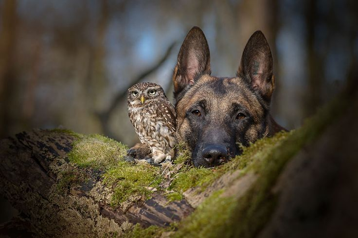 boredpanda:The Unlikely Friendship Of A Dog And An Owl