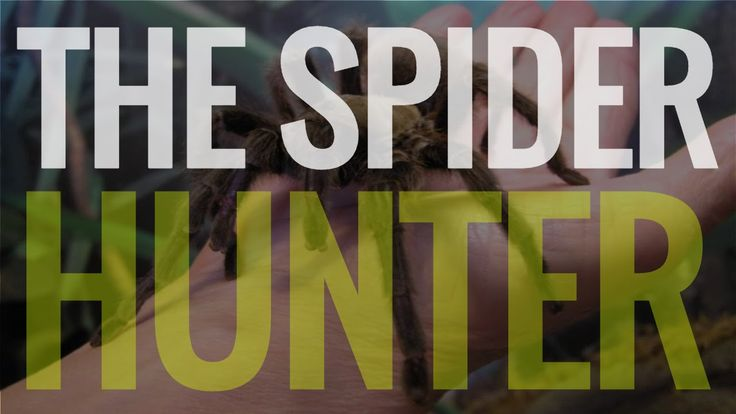 Spiders - The Spider Hunter Full Version