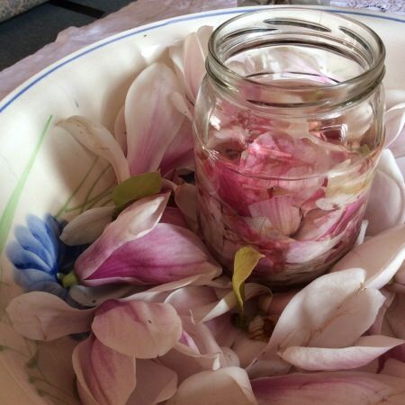 "Magnolia Vinegar Recipe | ""This magnolia flower vinegar recipe is something to die for. Within 24 hours it has turned from clear to a deep pink, and the flavour, well it has to be tasted to be believed."" Use in salad dressings, over steamed fish, drizzled with oil over sauteed vegetables, in a sweet dressing on exotic fruits"