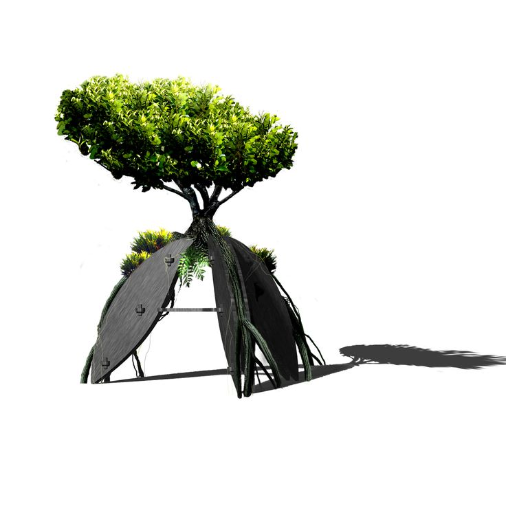 Concept Plypod featuring epiphytic small tree Griselinia lucida.