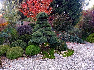 Japonská zahrada na Děčínsku (Czech) sklízí zasloužený obdiv a pozornost – Novinky.cz Chamaecyparis pisifera.