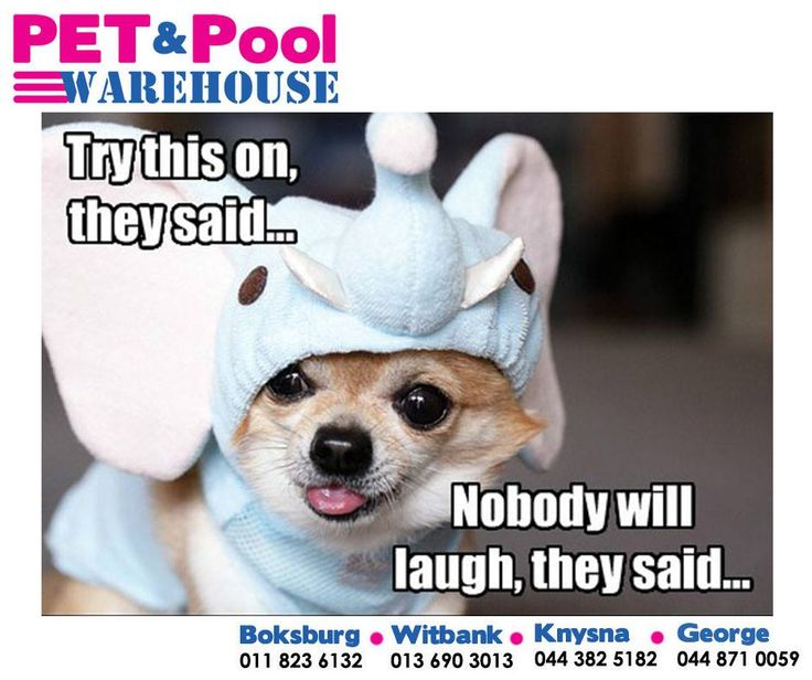 Try this on, they said... Nobody will laugh, they said... Have a wonderful Thursday everyone. Remember to pick up your pets food and other requirements from Pet Pool Warehouse. #PetPool #Thursday #funnypets
