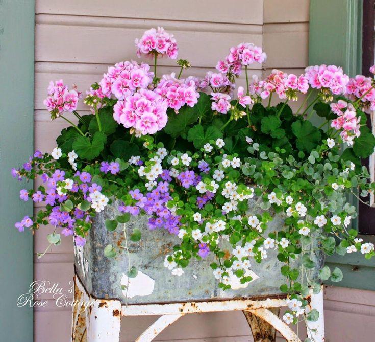 Beau conteneur fleurs de jardinage 210