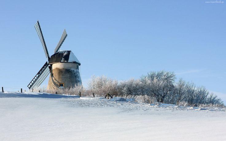 Wiatrak, Śnieg, Drzewa