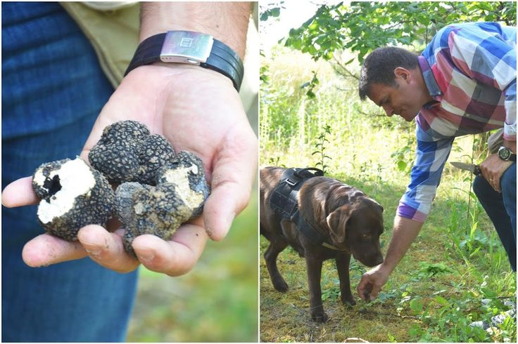 Truffels zoeken met Benoit en hond Honey in Matouges, Champagne-Ardenne, Frankrijk