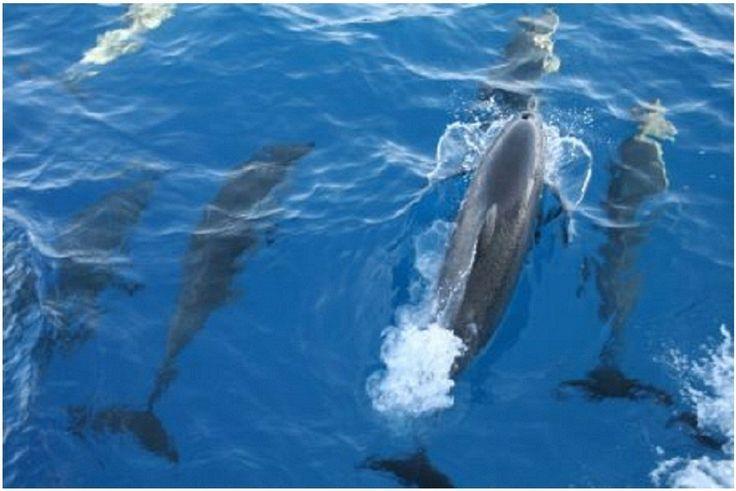 Makadi Bay Ausflüge-Delfin-Touren und Schwimmen mit Delfinen