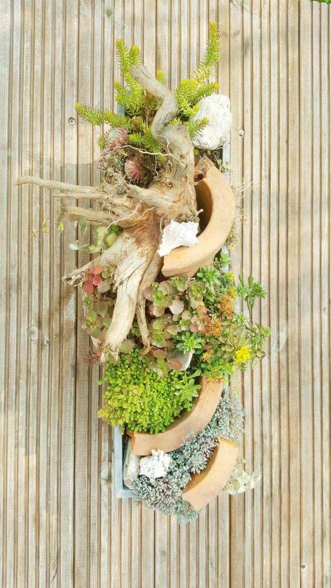 die besten 25 sukkulenten winterhart ideen auf pinterest steingartenpflanzen winterhart. Black Bedroom Furniture Sets. Home Design Ideas