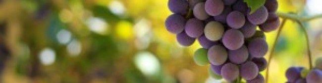 Wine Varietals A-Z
