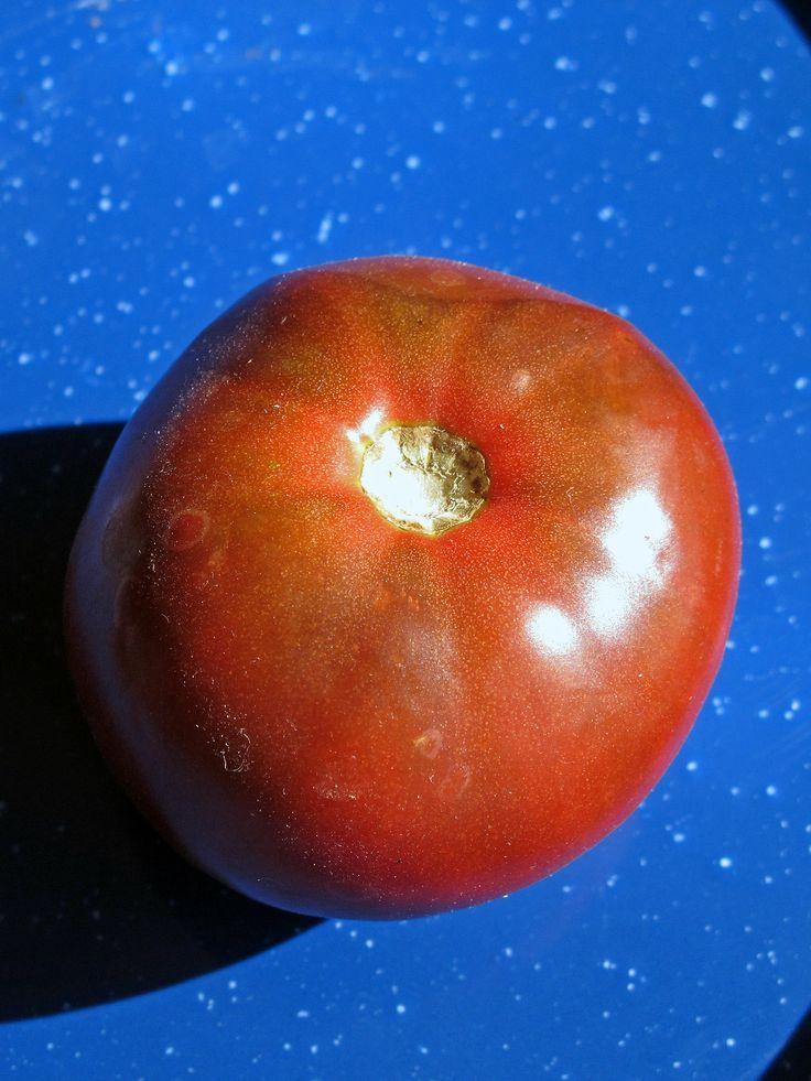 Diese russische schwarze Tomate ist aromatisch und eher würzig im Geschmack. Die Früchte sind mittelgroß und braunrot- eine typische Salattomate.