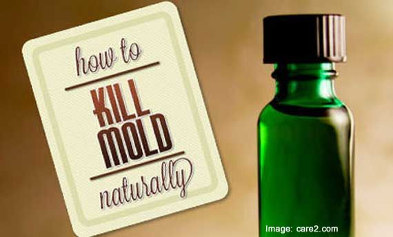 Mold makes for a terrible housemate. It can cause all sorts of health problems, and it's just not very pleasant to look at. You can go and spend money on harsh chemical mold removal agents, but why go industrial when you can get the same effectiveness from natural ingredients at a discount? Read on to …
