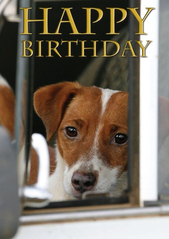 Happy Birthday Images With Jack Russell Dog Birthday Card Cool Happy Birthday Images Happy Birthday Images