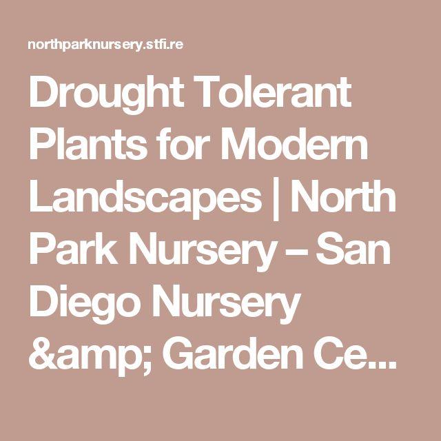 Drought Tolerant Plants for Modern Landscapes | North Park Nursery – San Diego Nursery & Garden Center
