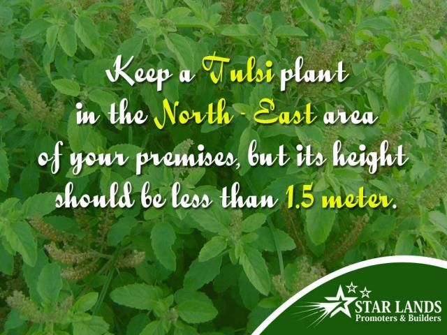 Vastu Tip #Vastu #Tip of the day! Keep a Tulsi plant in the North – east area of your premises, but its height should be less than 1.5 meter.