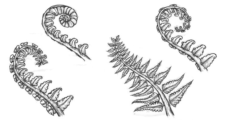 Line Drawing Of New Zealand : Best images about fern inspiration on pinterest a