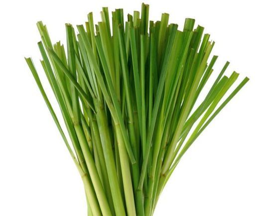 We use only 100% fruit & plant oils and extracts to scent our products! Lemon Grass is the most popular!