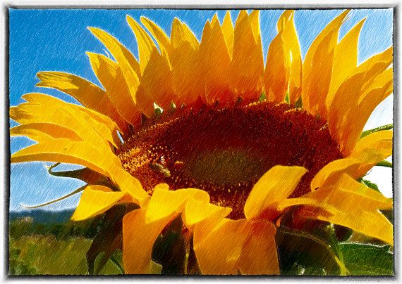 SunflowerPhotographyhome decorWall ArtRomantic by SunspotDesignArt