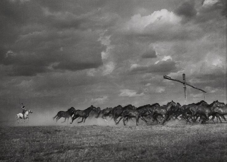 Herd of black horses on the puszta in Hungary, 1958 - by Ernö Vadas (1899 - 1962), Hungarian