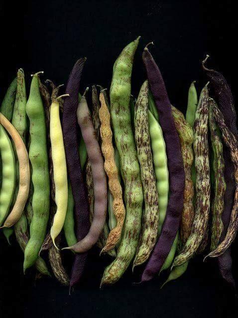 Agrobiodiversità territoriale ☺  Le ricerche del professore Di Novella, nel Parco Nazionale del Cilento (Sa) attestano la presenza di 79 varietà di fagioli.