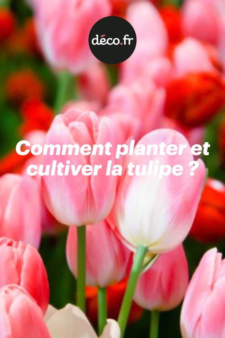 Epingle Par Martine Marneux Sur Jardinage En 2020 Avec Images