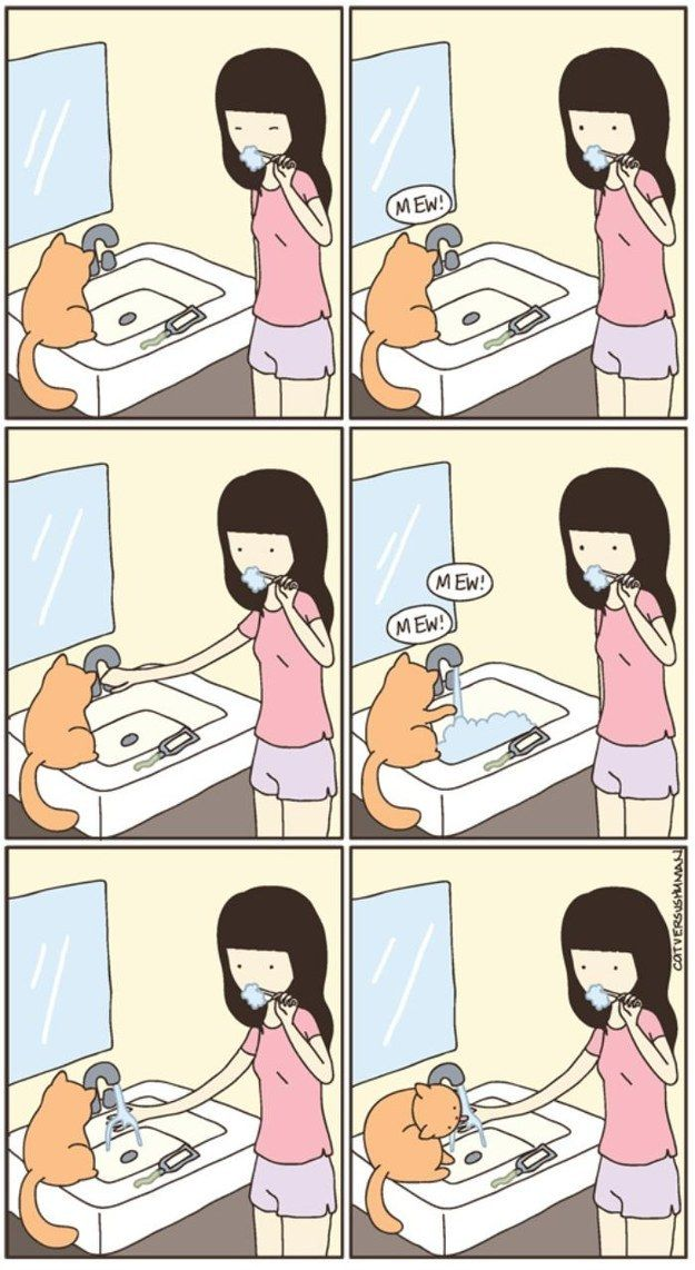 11 Weird Cat Habits We May Never Understand- true habits seen from experience!!