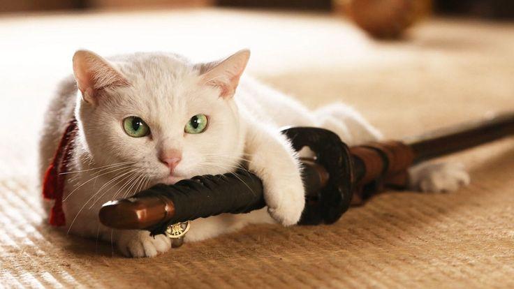Même s'ils ont une journée internationale fixée au 8 Août de chaque année, les chats ont aussi leur journée au Japon et c'est aujourd'hui ! Alors pourquoi un 22 Février ? Tout simplement parce qu'en japonais, le chiffre deux se prononce Ni (に) donc le 22.2 on peut dire que c'est Ni Ni Ni qui s'est transformé en Nyan Nyan Nyan ce qui est considéré comme le miaulement du félin sur l'archipel. Le Neko no Hi (猫の日) de cette année est particulier puisqu'il marque les 30 ans de la mise en place de…