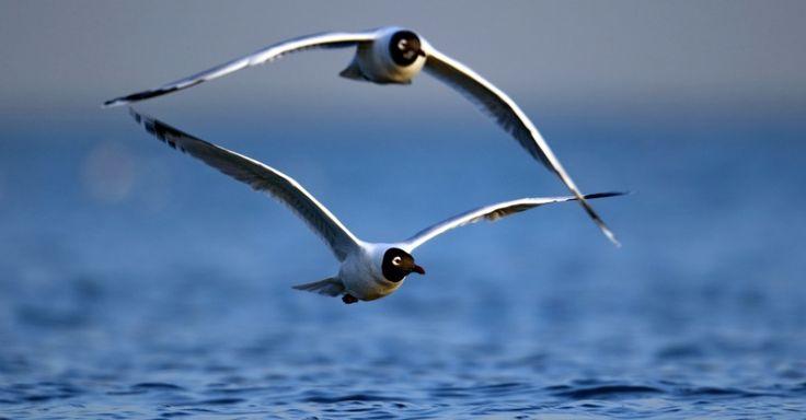 Aves migratórias voam sobre lago em Qinhuangdao, província de Hebei, na China