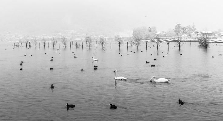 Sarnico Swan&Snow