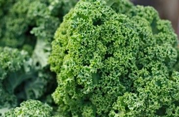 Капуста кале - сорта и полезные свойства. Рецепты приготовления блюд из капусты кале с фото