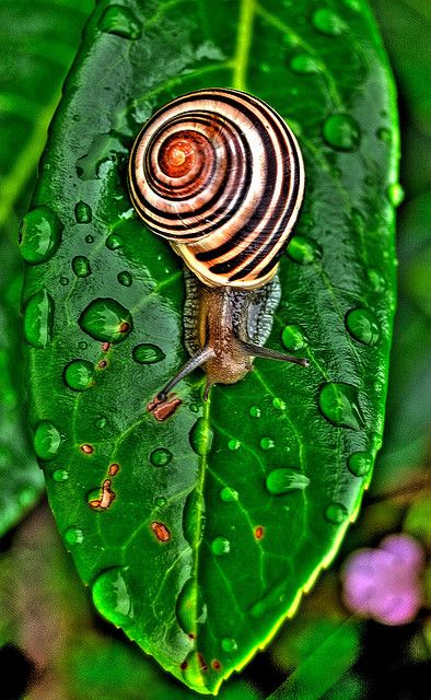 Snail, one of the creatures this earth has that I've always had a special place in my heart for!