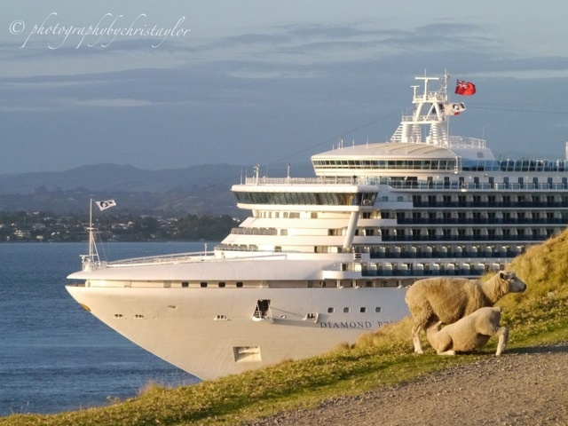 Diamond Princess in New Zealand. Click here to view our Instagram images