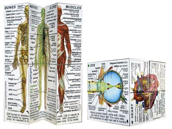 Zoobookoo - Human Body